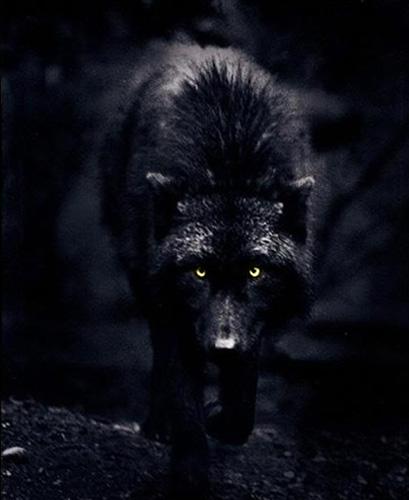 Thorn_wolf-form_01.jpg