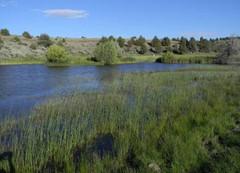River_Marsh.jpg