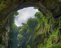 Herbology-Cave_01.jpg